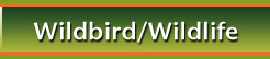 Wildbird/Wildlife